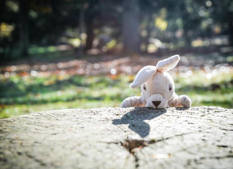 Séance photo grossesse automne - Fontainebleau
